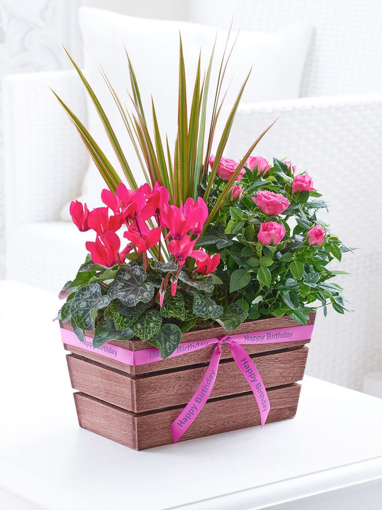 Happy Birthday Rosy Pink Planter Dooleys Flowers
